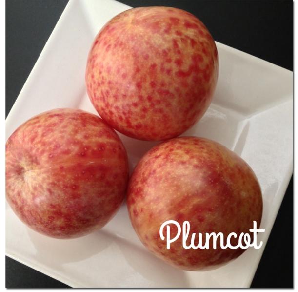 Plumcots